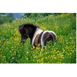 """Cure de printemps """"Plant'Equine"""""""