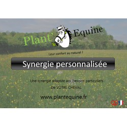 SYNERGIE PERSONNALISEE