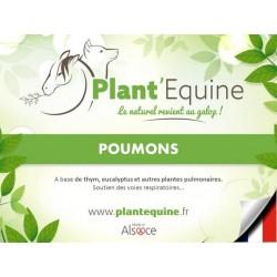 """""""Plant'Equine"""" Poumons"""