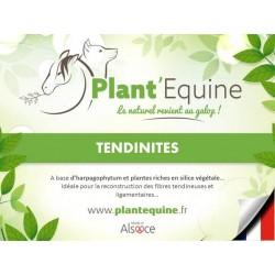 """Plant'Equine"" Tendinites"
