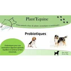 Probiotiques chiens