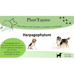 Harpagophytum Chien