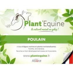 Plant'Equine Poulain