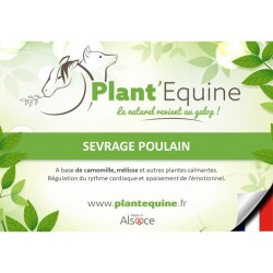 """Plant'Equine"" Sevrage Poulain"