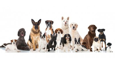 Notre gamme chiens